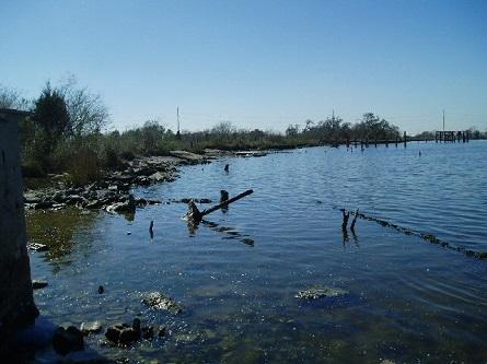 Coastal habitat at Baytown Nature Center before restoration.