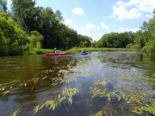Two kayakers float on a blue river surrounded by trees with water plants visible beneath the surface.
