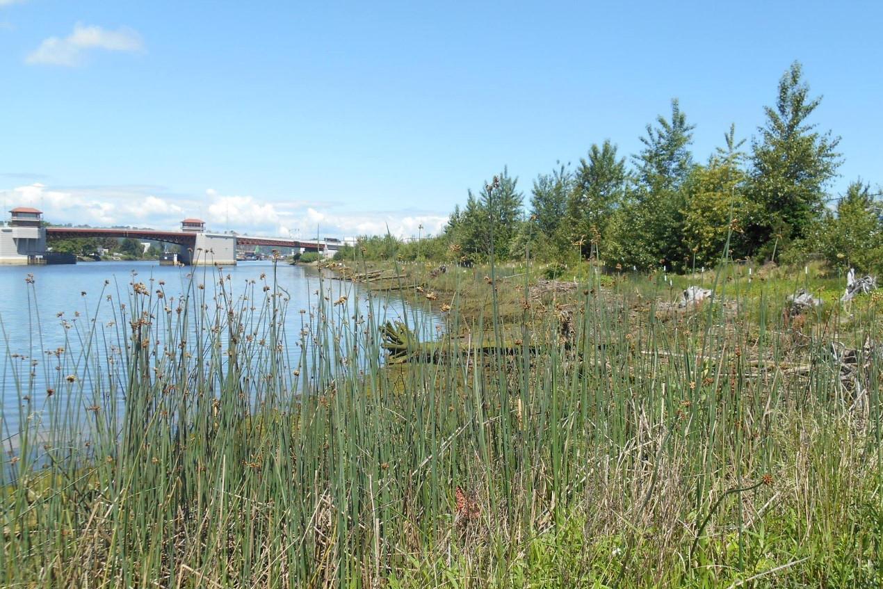 View of Lower Duwamish River aquatic and riparian habitat. Image: Boeing