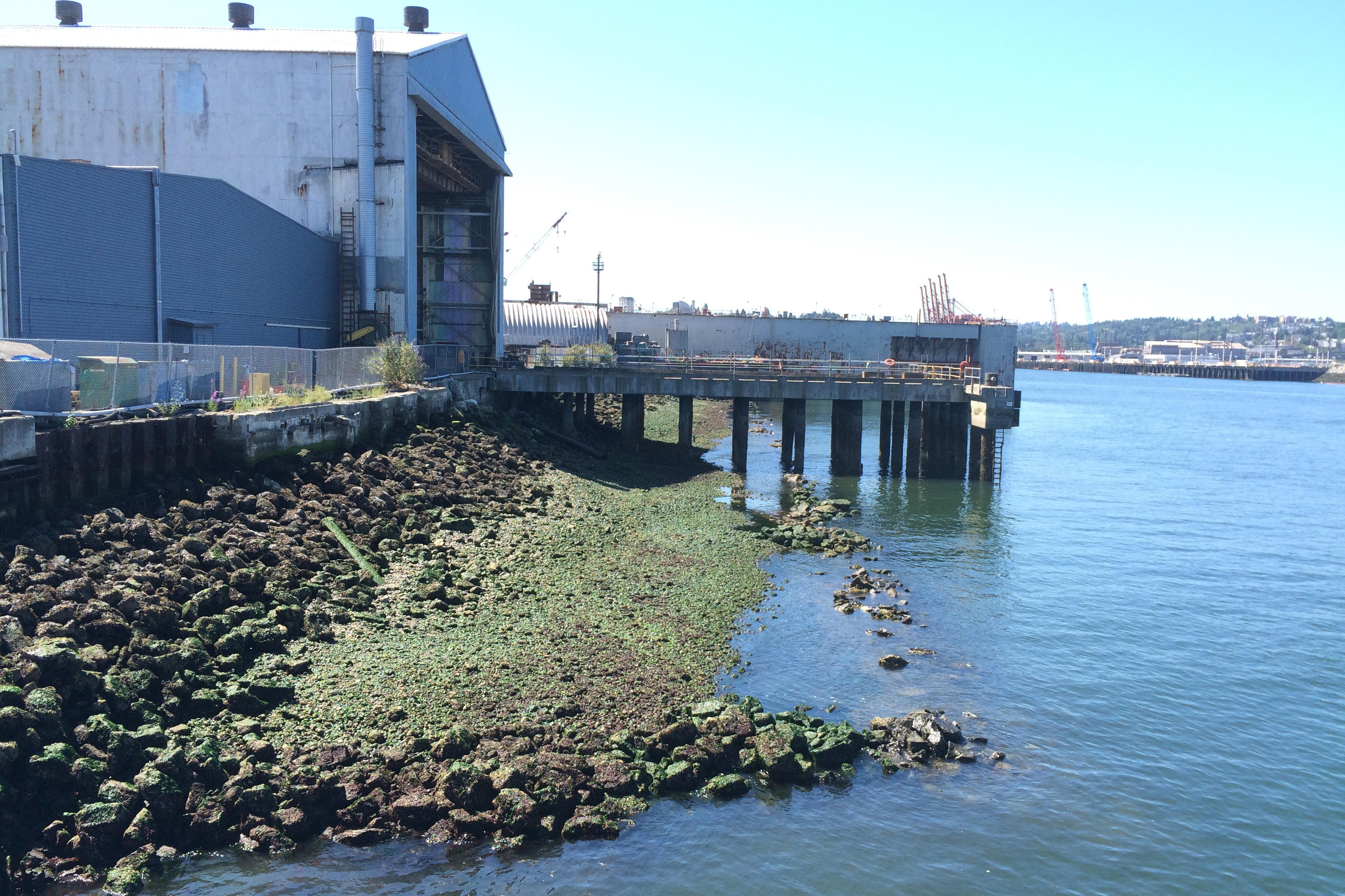 An industrial barn and pier on the banks of the Lower Duwamish River. Image: Floyd Snider