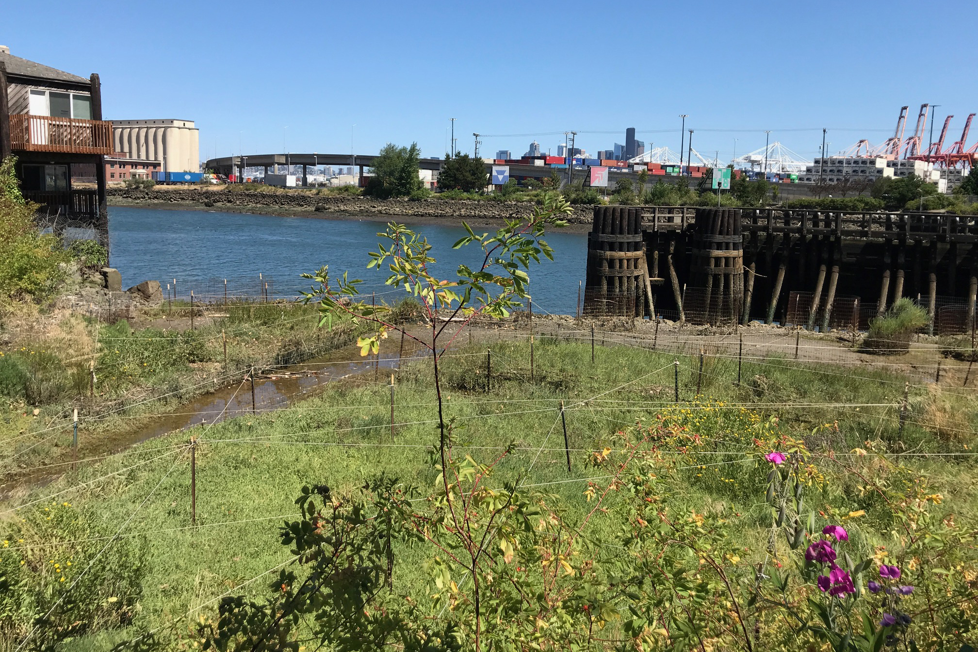 Lower Duwamish River bank where the Bluefield Holding's restoration site is located. Image: USFWS