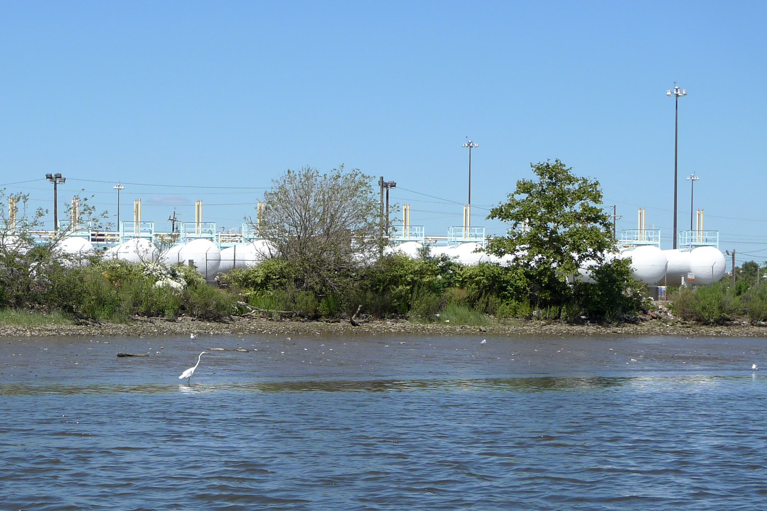 A white crane wades in the Passaic River in New Jersey. Chemical tanks line the shore behind it.