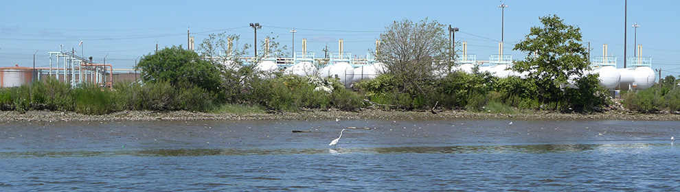 Contamination in water, river and bay bottom sediment, wetland, and shoreline habitats poses risks to invertebrates, fish, and wildlife.