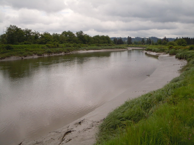 Union Slough is a branch of the Snohomish River which feeds into Port Gardner Bay. These sloughs are critical to the survival of many species of salmonids.
