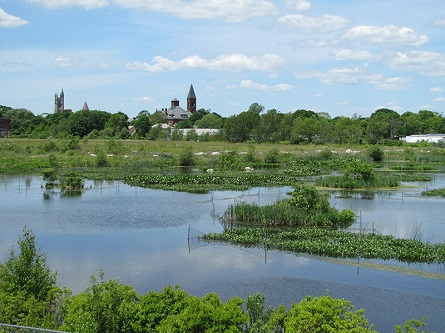 The polluted Atlas Tack Superfund site was transformed into vibrant coastal habitat. Here, you can see the new freshwater marsh with the town of Fairhaven, Mass., in the background.