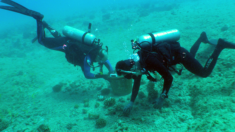 Two divers unload a basket full of loose corals into a safe holding area so that they can be returned after the rubble from the grounding site is removed, minimizing further impacts.
