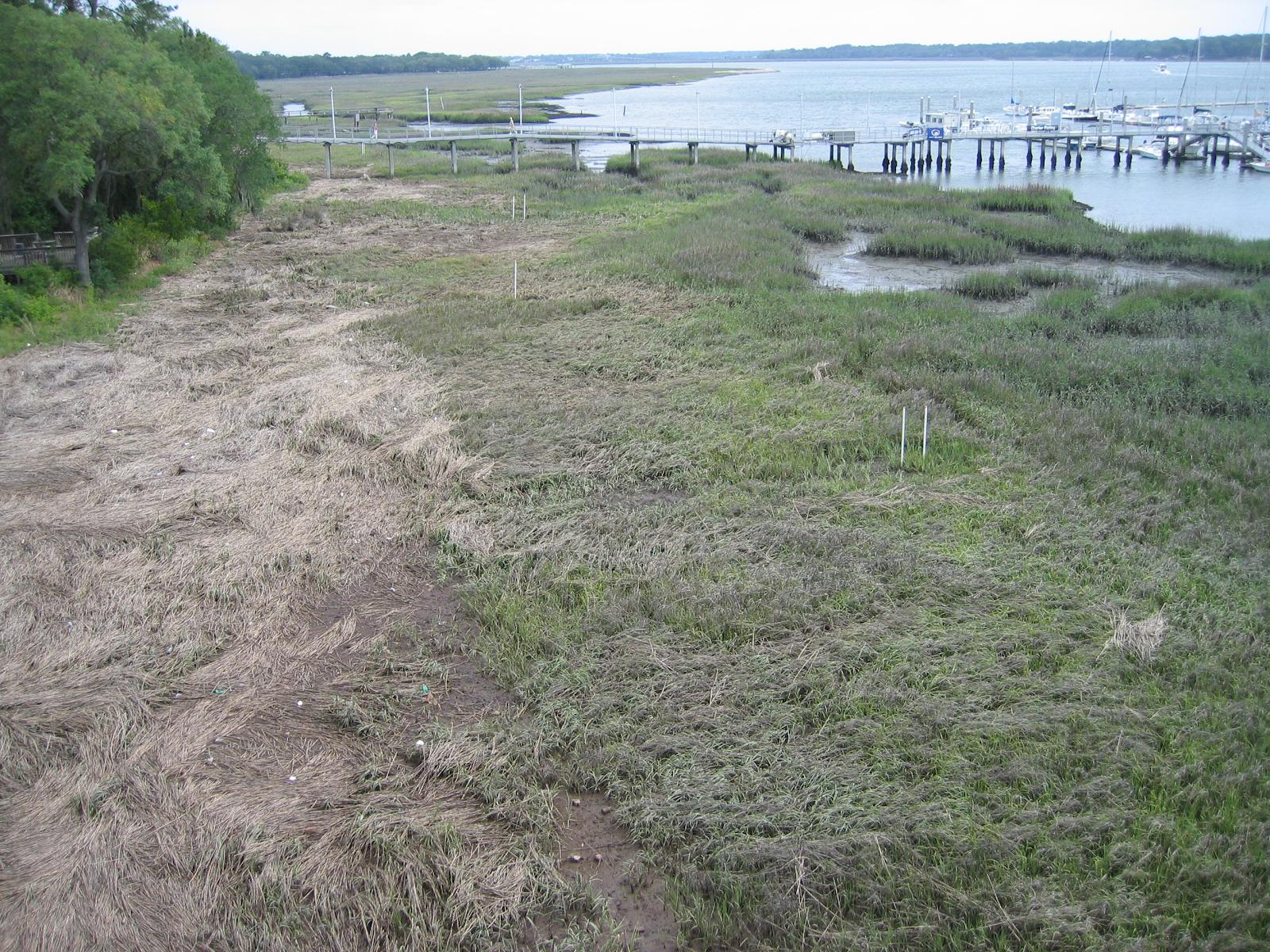 View of saltmarsh on edge of water at Port of Baldwin Mines, South Carolina.