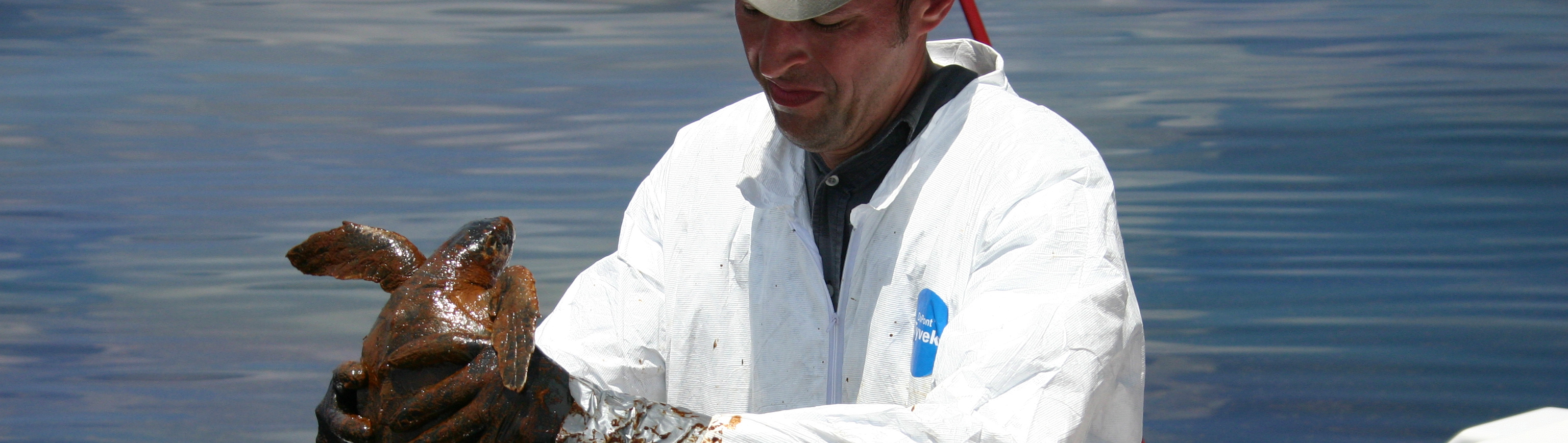 A recovered oiled sea turtle during the 2010 Deepwater Horizon oil spill in the Gulf of Mexico.