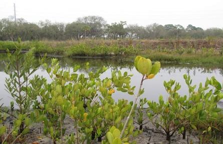 Restored wetland at the Raleigh Street Dump site.
