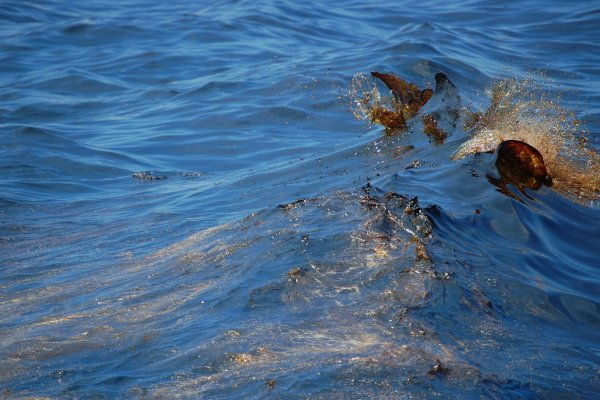 Oil splashes atop a small ocean wave.