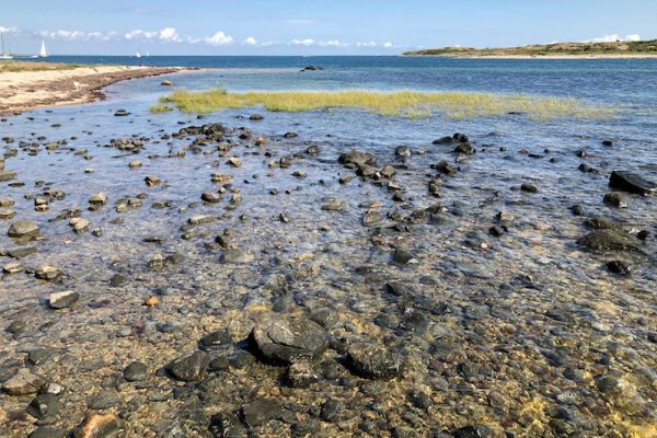 Tidal habitat on Cuttyhunk Island in Buzzards Bay, Massachusetts.