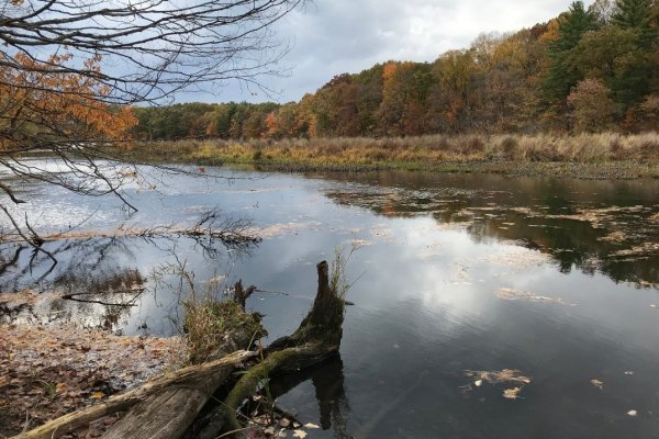 Trees line the shore of the Kalamazoo River. Credit: Lisa Williams/USFWS