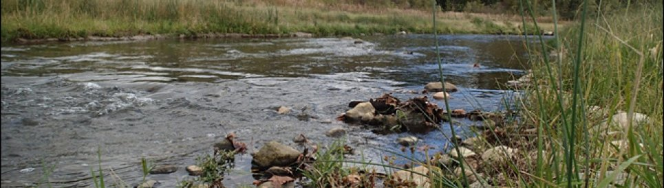 Stream with rocks and green grass on the edges.