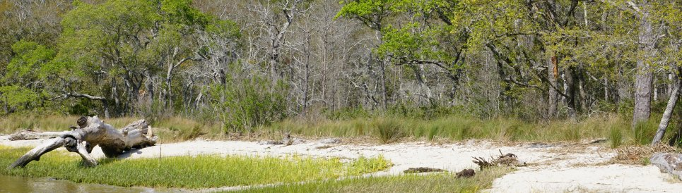 Wetlands and beach at Carolina Beach State Park, NC.