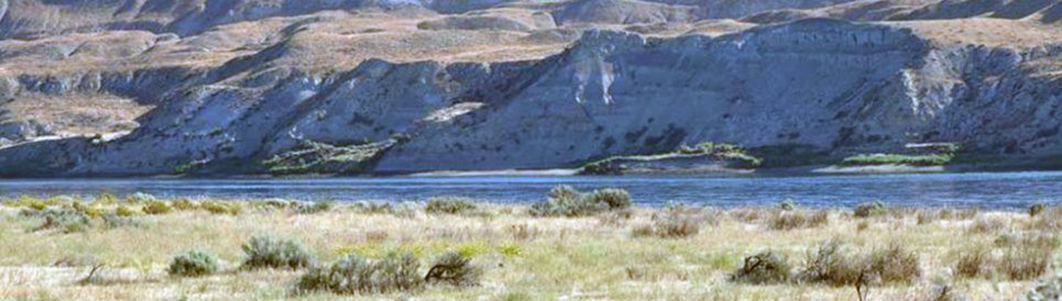 The dry shrub-steppe habitat at Washington's Hanford Nuclear Reservation is rare for the region because it is so extensive, intact, and relatively healthy.