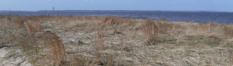 Coastal dunes on the south shore of the Raritan Bay Slag site provide natural protection from storm events.
