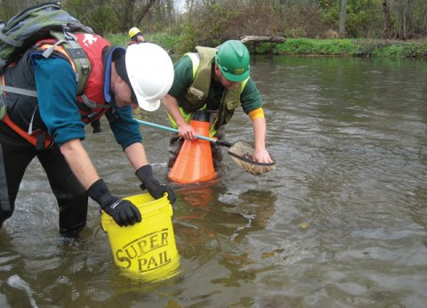 Following an oil spill on the Kalamazoo River in Michigan in 2010, scientists assessed impacts to mussel shells from response-related boat traffic.