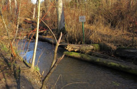 Large woody debris in restored tributary to Whatcom Creek provides habitat for salmon.