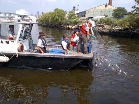 Fish community survey on Newtown Creek.