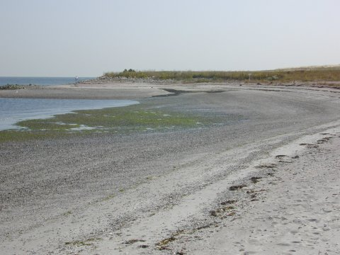 Lordship beach after remediation.