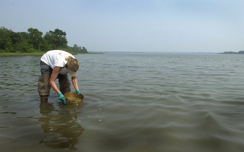 After the 2000 pipeline leak of oil from the Chalk Point PEPCO facility into Swanson Creek in Maryland, a scientist samples sediment to determine the impact on bottom-dwelling creatures.