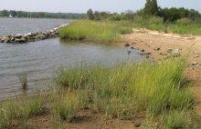 Marsh beach shoreline restored as part of the Chalk Point Oil spill settlement.