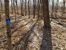 Existing trail along Buell Brook. Project proposes it be modified for ADA compliance.