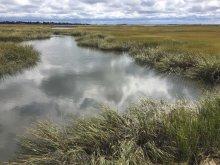 A salt marsh channel landscape with a cloudy sky.