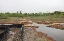 Wetland channels have reconnected to tidal flow; booms hold back erosion