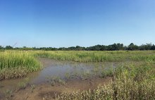 Post-Construction at Noisette Creek. The 13-acre site now supports salt marsh vegetation and wildlife.