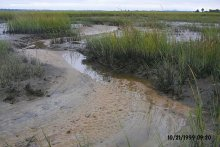 LCP marsh after removal.