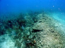 Coral reef damaged by the Margara.