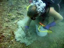 Diver placing cement around the base of a soft coral that is being reattached.