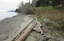 Restored feeder bluff regains natural shoreline processes.