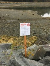 Alert posted at Starrigavan Beach recommending against harvest and consumption of shellfish from the area. (Photo provided by the Alaska Department of Environmental Conservation, April 29, 2017)