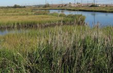 South Branch Creek, Piles Creek, and their associated tidal wetlands are contaminated as a result of releases associated with the industrial facilities that surround them.