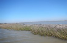 These levees contain dredged material used to elevate sunken areas of Pierce Marsh.