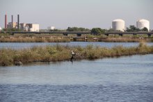Chemical manufacturing and petroleum refining facilities have released toxins—including PCBs, dioxins, lead, and mercury—into the bayou and surrounding areas for decades.