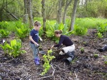 Volunteers plant vegatation to restore a section of Commencement Bay.