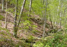 Hardwood forest within the Belt Woods Natural Environment Area.
