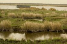 Marshes were one of many critical habitats for fish and birds affected by the Deepwater Horizon oil spill in 2010.