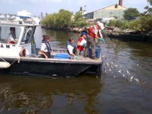 Fish community survey on Newtown Creek.