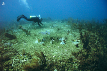 Underwater view of damaged and dead corals.
