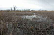 A potential salt marsh restoration site, McKinney National Wildlife Refuge, Stratford, Connecticut.