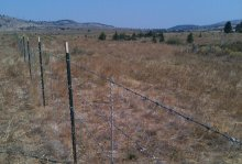 Adding fencing along stream banks helps protect sensitive habitat in and along the water from being trampled by roaming livestock and wild horses.