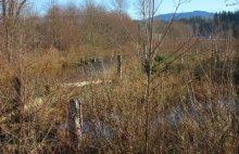 Side channel of 3-acre floodplain restoration project.