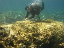 A diver documents coral injuries caused by M/V Casitas grounding