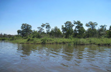 Surrounding habitat consists of open water, marsh grass, scrub and cedar forest.
