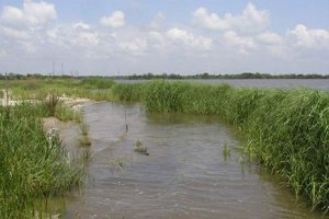 Marsh habitat restored at the Bailey Waste site. (USFWS)