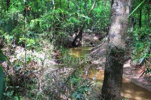 Freshwater creek running through the bottomland hardwood habitat of Simmons Tract.